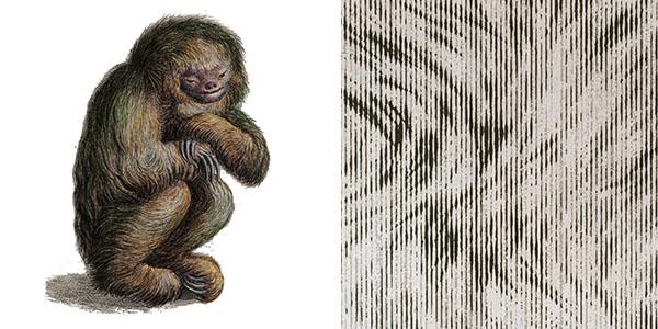 blushing-sloth-8F23.jpg