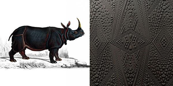 dwarf-rhino-Y8BW.jpg